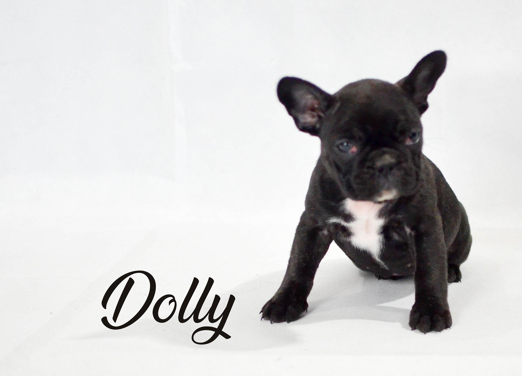 Dolly3