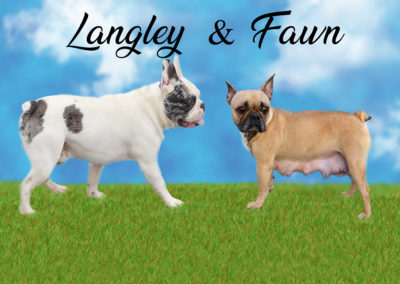 Langley and fawn